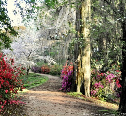 Orangeburg, SC: River Walk in the spring