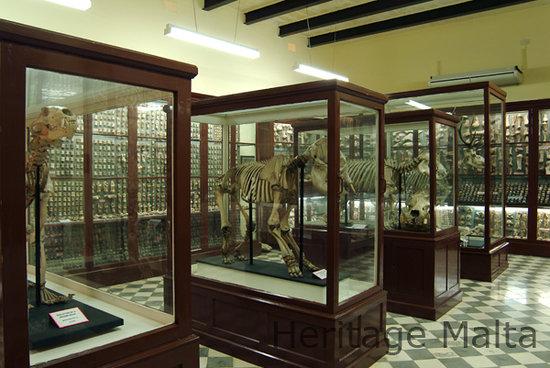 Ghar Dalam Cave and Museum
