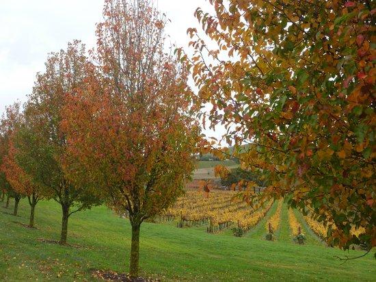 De Bortoli Winery: Trees along entry drive.