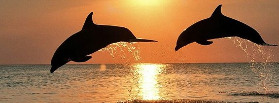 Dolphin Water Tours LLC : getlstd_property_photo