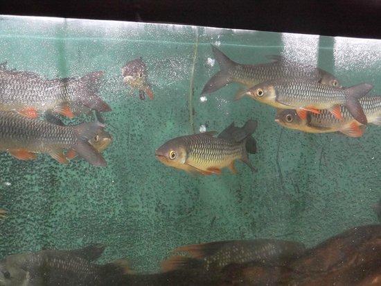 Water World Lanka: The Acquarium