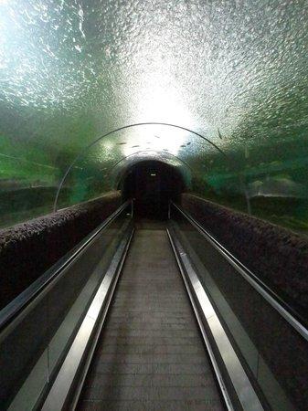 Water World Lanka: Under Water Tunnel