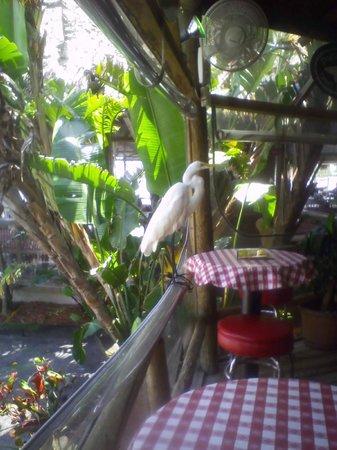 Conchy Joe's Seafood : Heron sampling bar area