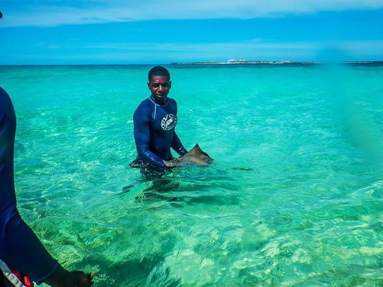 """Gibbs Cay : """"Sharkbait"""", our guide, just found a small stingray"""