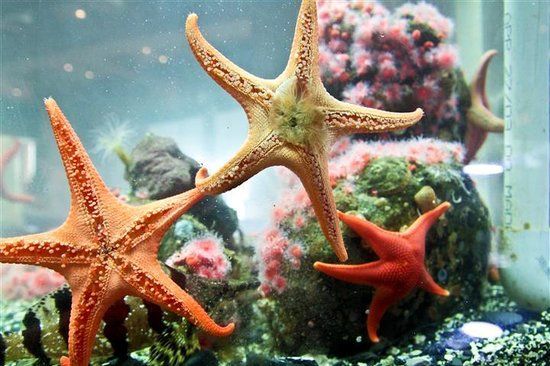 Harvey House B&B: Ucluelet Aquarium