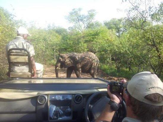 Kapama River Lodge: no último safari conseguimos ver os elefantes