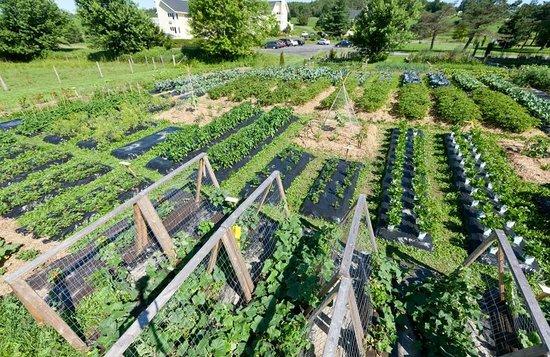 Auberge West Brome: Garden