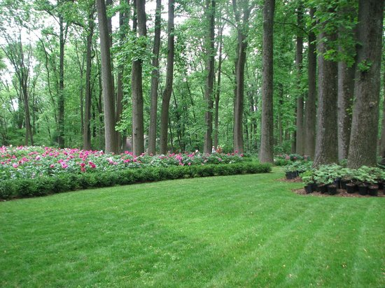 Peony's Envy: What a lawn