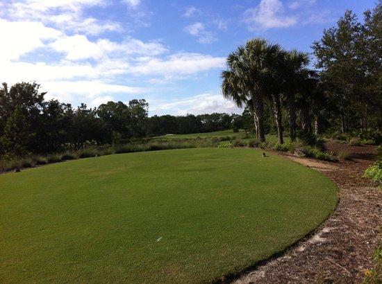Tiburón Golf Club: Tee View