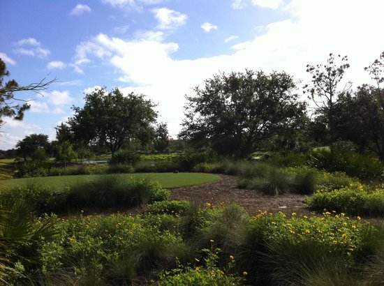 Tiburon Golf Club: Green View