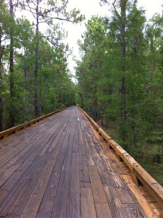Tiburon Golf Club: Cart path through the woods