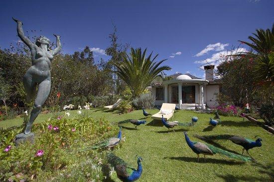 La Mirage Garden Hotel & Spa: Gardens