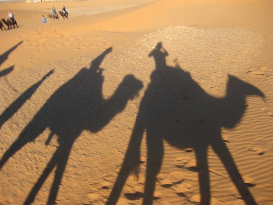 Marrakech Camel Trips: I loved this at dusk!