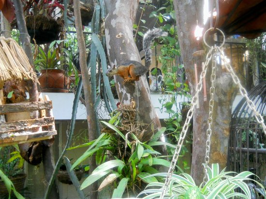 Casa Lima B & B: Squirrel