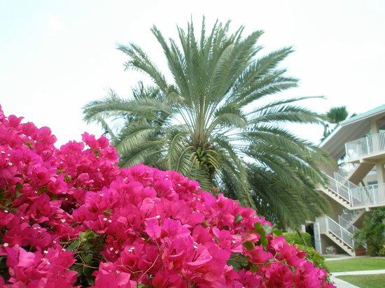 Plantation Village Beach Resort: beautiful landscaping and flowers