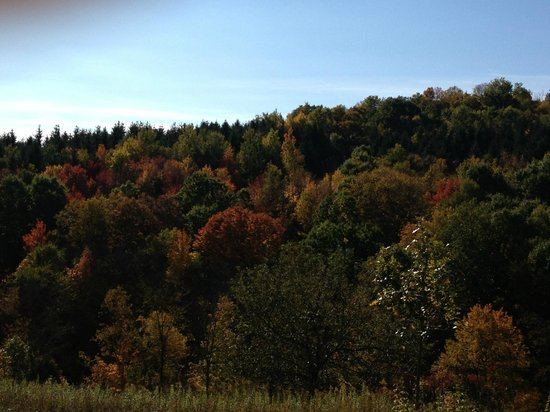 Kickapoo Valley Ranch Guest Cabins: Fall view