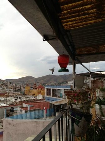 Casa Bertha : Humming birds abound on the Terrace