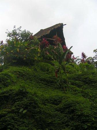 Suchipakari Ecuadorian Jungle Lodge: Mirador del lodge desde la entrada