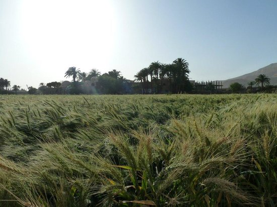 Beit Sabee Hotel: The field right outside the guest house