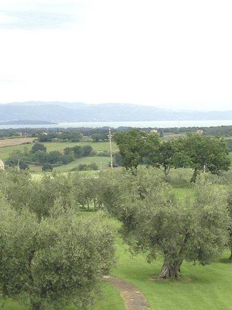 Locanda Poggioleone : wish I had gotten pictures of the beautiful rose gardens