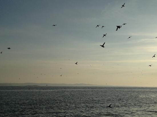 Serenity Farne Island Boat Tours: Fantastic trip! Wonderful landscapes!