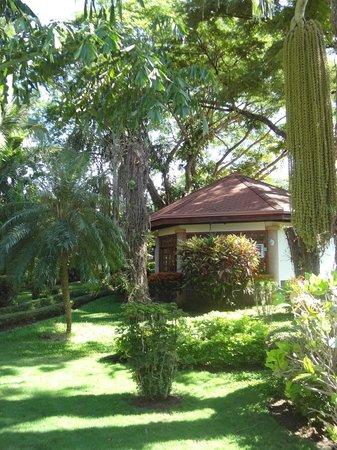 Villa Acacia: Una Villa y su naturaleza