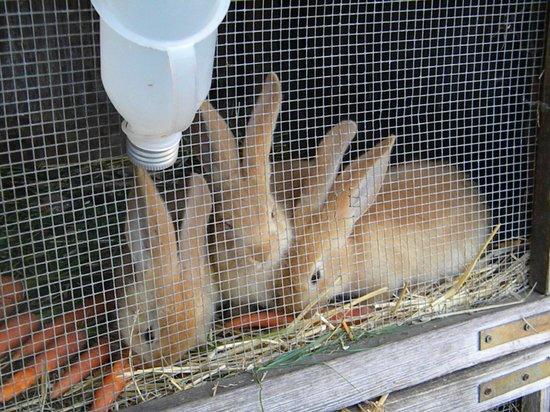 Gasthof  Ritter St. Georg : bunnies in their hutches