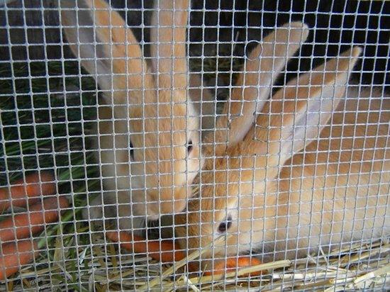Gasthof  Ritter St. Georg : more bunnies ...