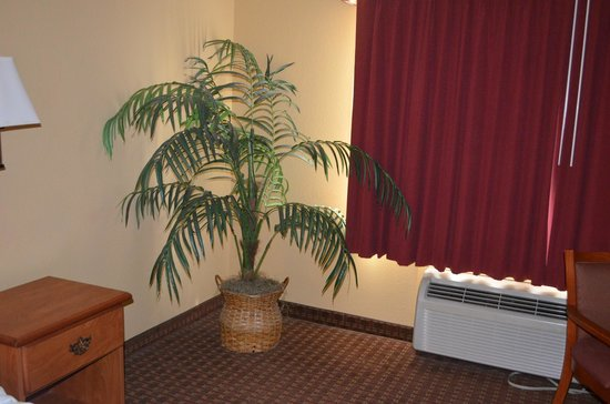 Best Western Mayport Inn & Suites: room