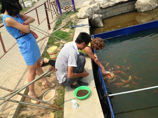 Huantai County, China: Tåteflaskemating av fisk!
