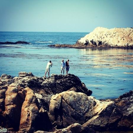17-Mile Drive: summer time ..