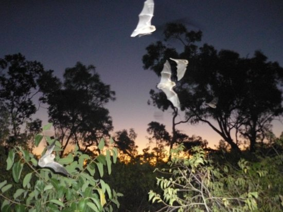 Undara Experience: Micro Bats on the amazing Wildlife at Sunset tour