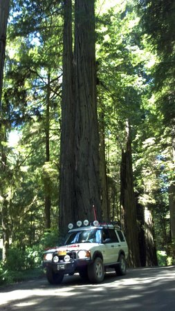 Gold Bluffs Beach Campground: Exploring the Redwoods