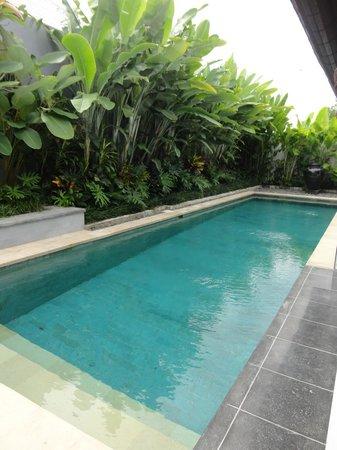 Villa Amatoa : Pool