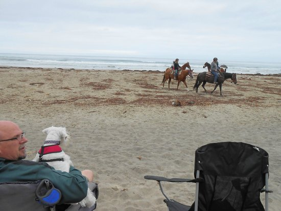 Cayucos Beach Inn: Horseback Riding on the Beach