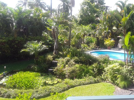 Orchid Tree Bed and Breakfast: View of garden