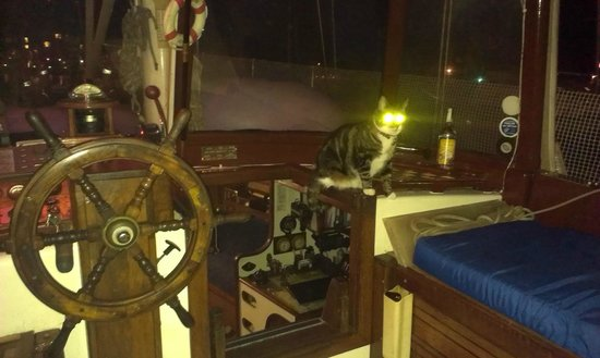 Port Sail Charters: cat