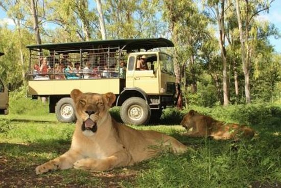 Cascavelle: Come and enjoy our Big Cat Drive thru, great for families!