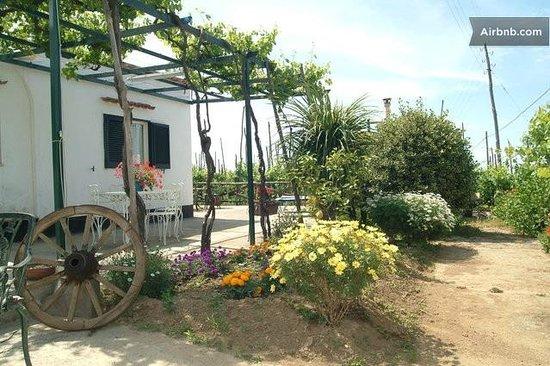 Maruzzella B&B : giardino