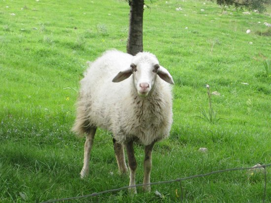Giardino Donna Lavia : Tiere gehören dazu