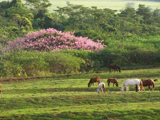 Araraquara, SP: animais