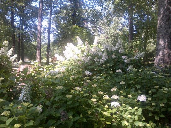 Memphis Botanic Garden: Hydrangeas in May