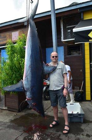 Saint-Gilles-Les-Bains, Ile de La Réunion : requin mako 220 kg !