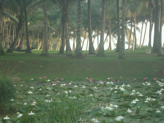 Club Med Bintan Island: Lotus pond