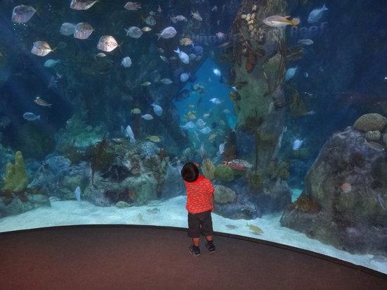 ... the garden - Photo de ABQ BioPark Aquarium, Albuquerque - TripAdvisor