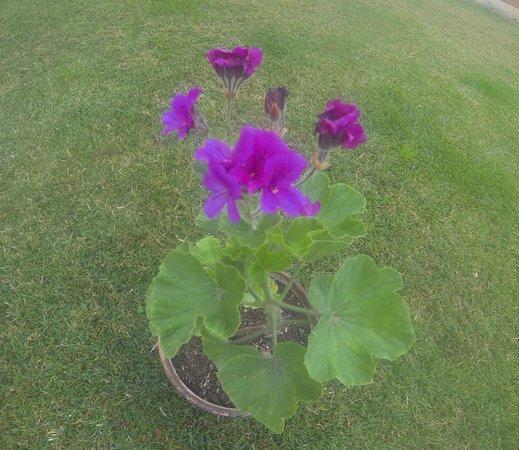 Las Orquideas Hostal : Flores en el jardin