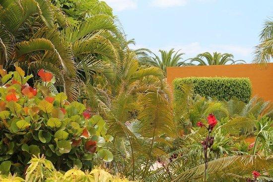 Bahia Principe Costa Adeje: Garten