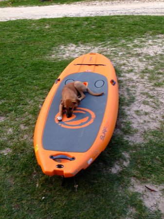 Stand Up Paddle Tobago: Maxie trying out our new SUP board