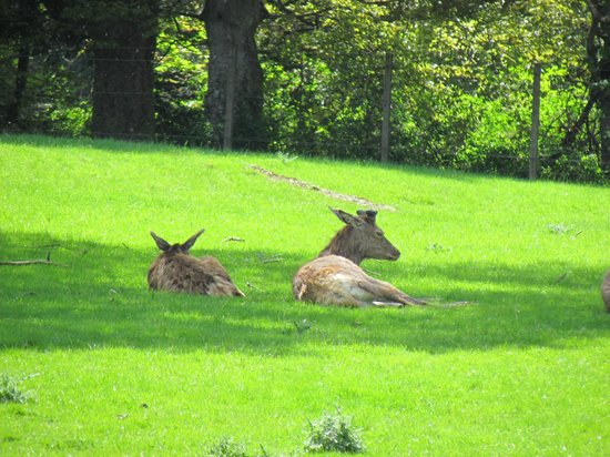 Blair Castle and Hercules Gardens: Deer Park