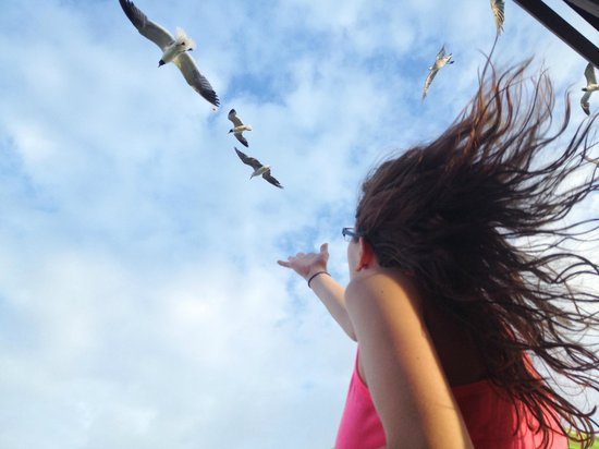 Surfside Beach, Teksas: My daughter feeding the seagulls from our balcony